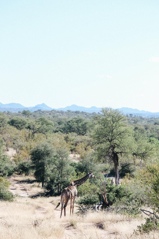safari-128.jpg