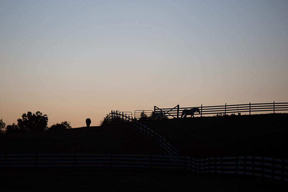 Horses are free to roam in the fields at Stonegate Farm in Coolville, Ohio. Stonegate is a boarding and riding facility and is home to the Ohio University Equestrian Team.