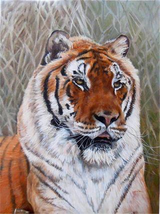 Tiger By Laura Spooner .jpg