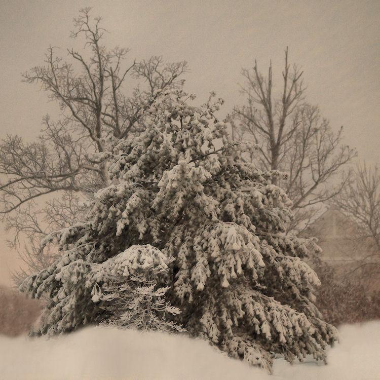 instagram-chrysti-winter-tree-manassas