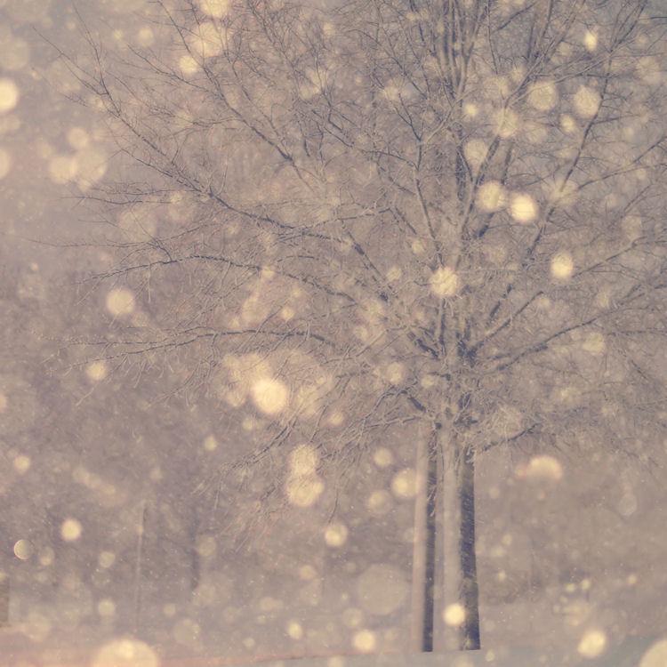 chrysti-manassas-snowstorm-photography