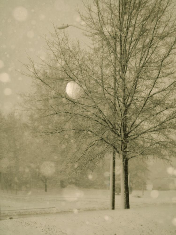 hydeck-winter-photography-manassas-virginia