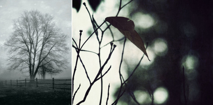 Photo Credits: © Susan Tuttle (left), © Christy Hydeck (right)