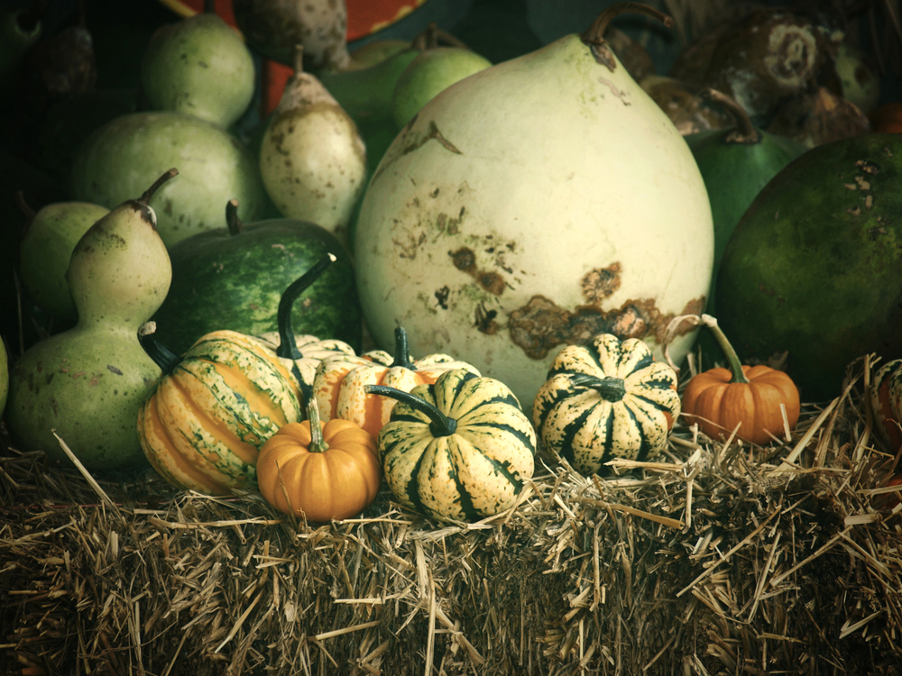 A plethora of gourds and pumpkins ring in Autumn at Ganyard Hill Farm in Durham, North Carolina. | © Christy Hydeck