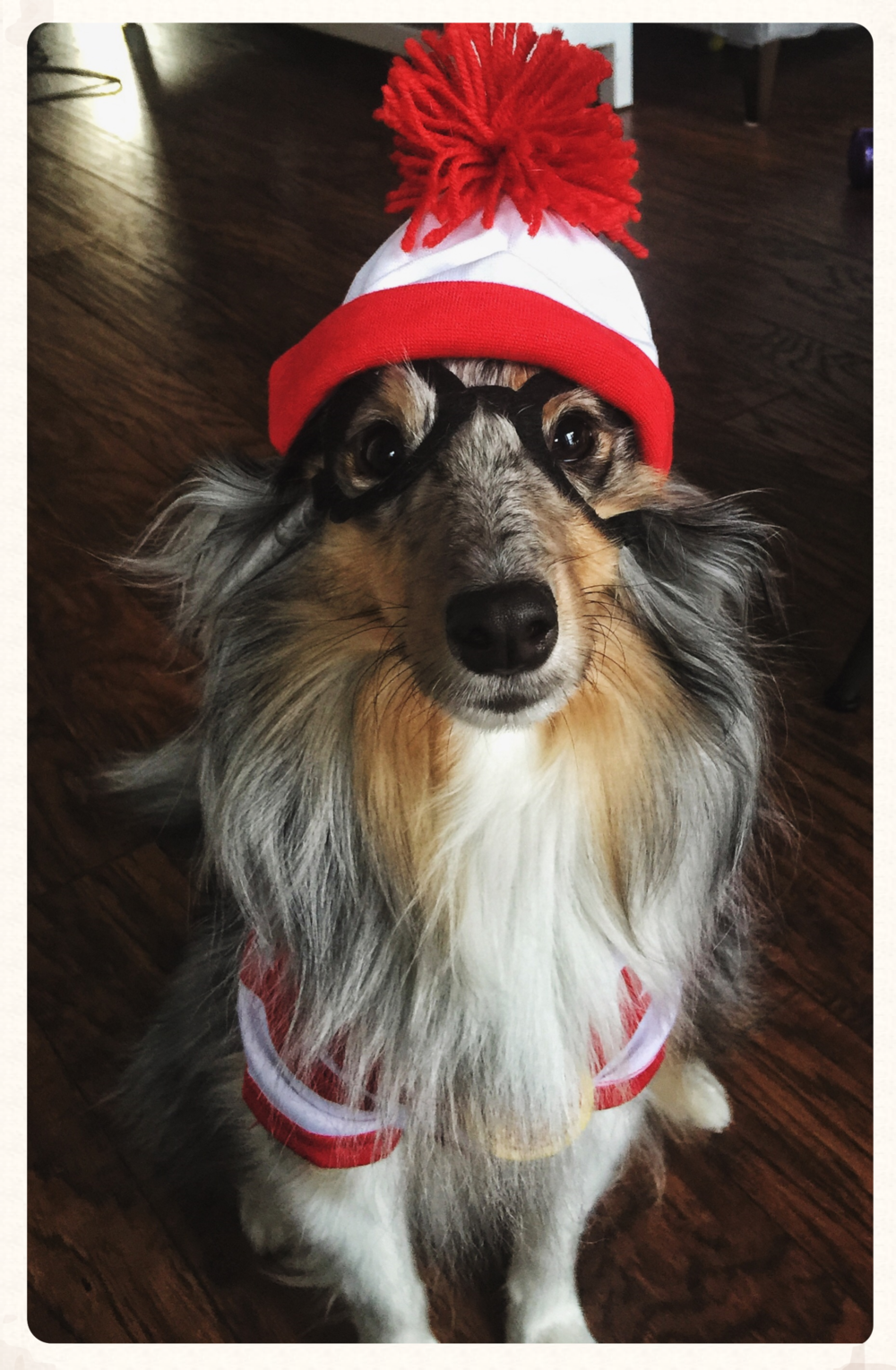 Cooper | Halloween 2015