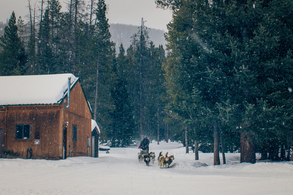 Dogsledding at Good Time Adventures | Breckenridge, Colorado | 2015 | © Christy Hydeck