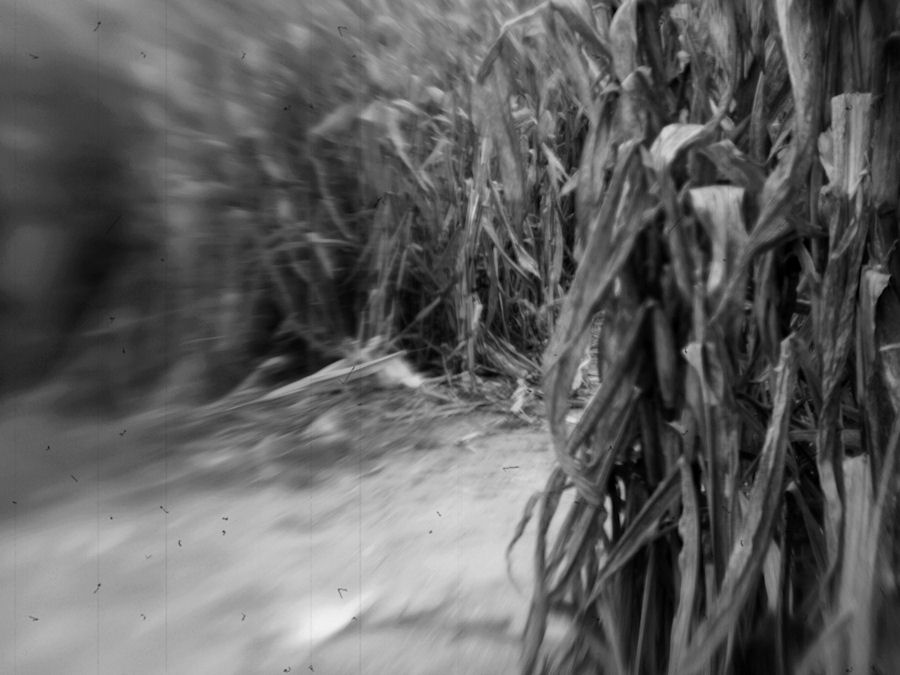 'Children of the Corn' // Durham, North Carolina // © Christy Hydeck // AlwaysChrysti.com