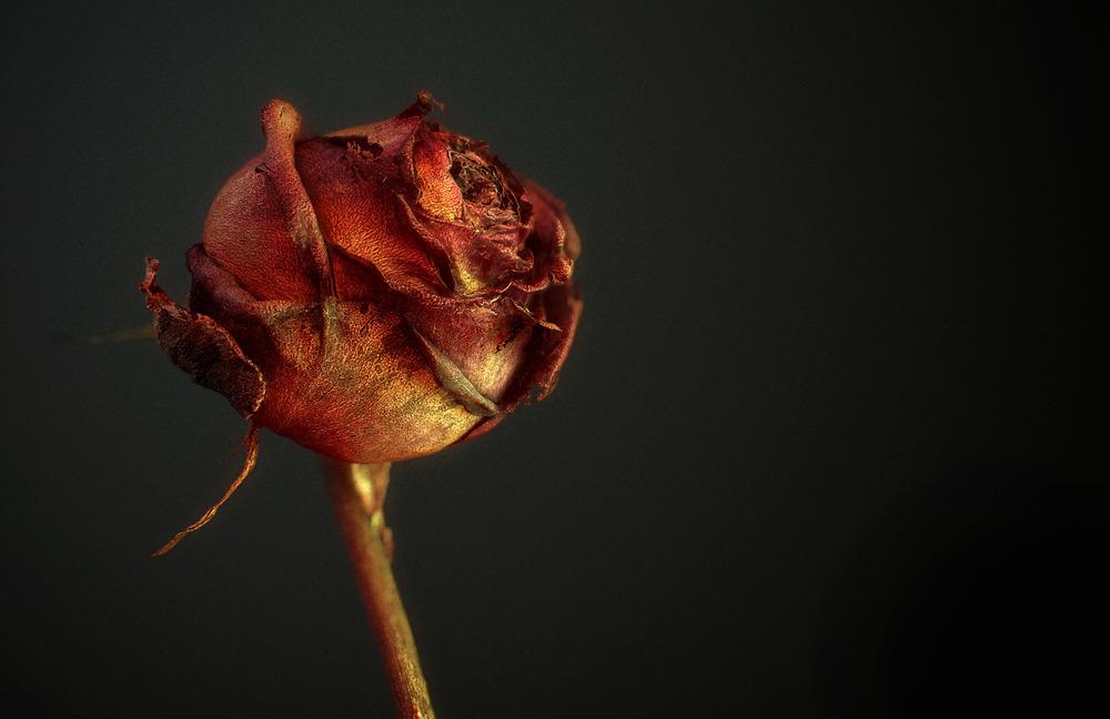 Rose Photogrametry