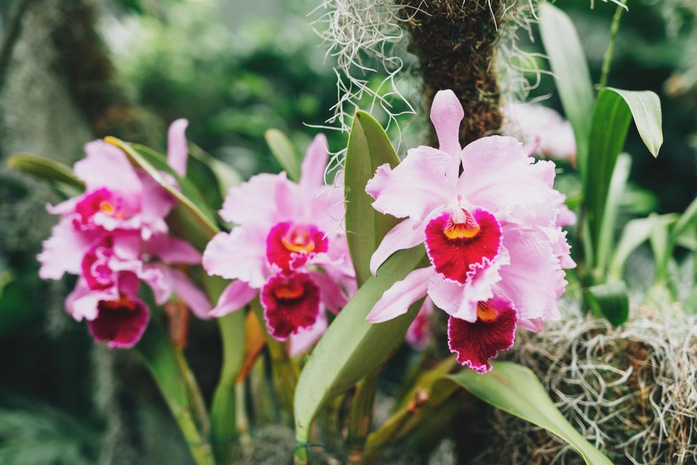 Botanical Inspiration | Nina Tekwani www.ninatekwani.com_10.JPG
