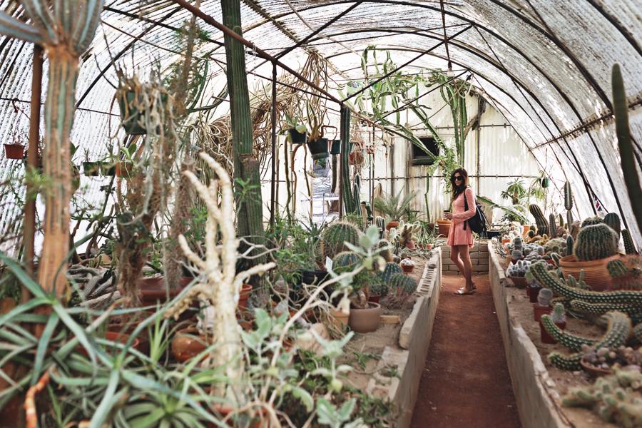 Moorten Botanical Gardens | Nina Tekwani www.ninatekwani.com