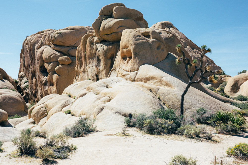 Joshua Tree National Park | Nina Tekwani www.ninatekwani.com