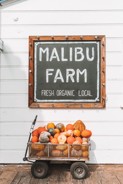 1286-ninatekwani-Malibu Farm.jpg