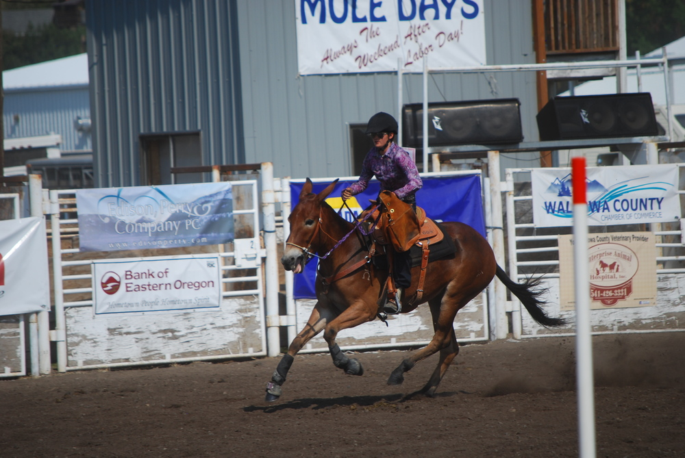 The author riding her mule, Rafter F Josephine.