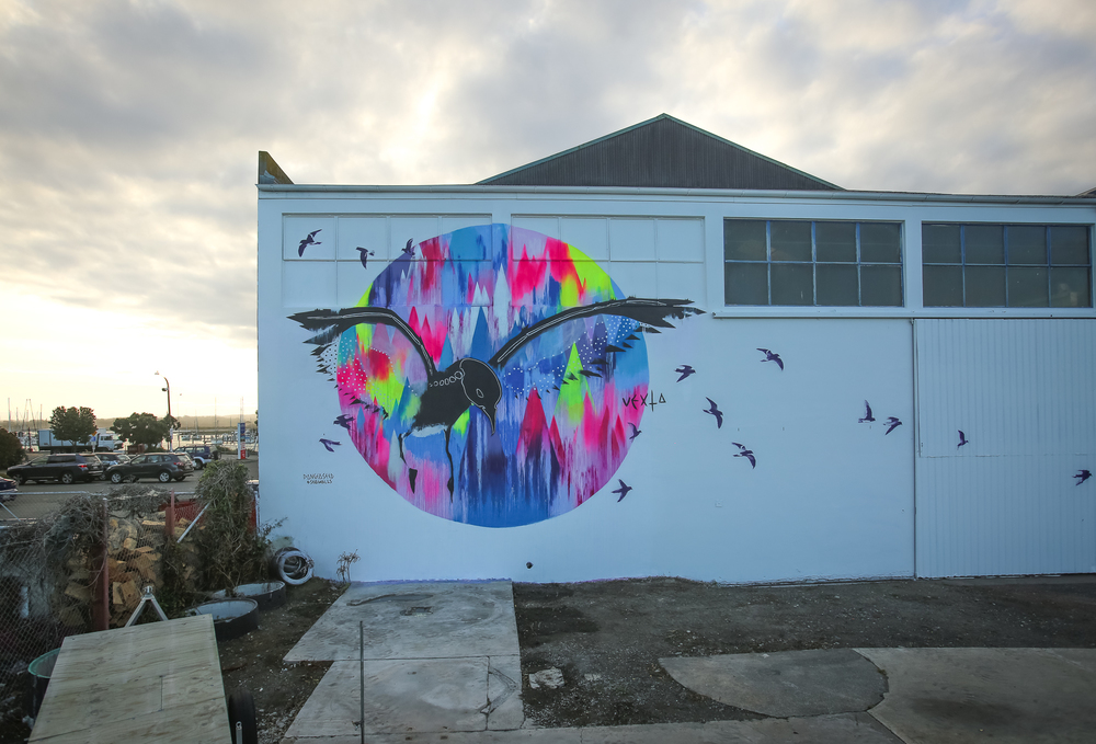 Mural by @VEXTA, raising awareness for the critically endangered New Zealand Storm Petrel.