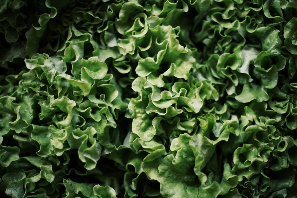Lettuce for the gods. Donated by The Locavore Store via Puna Greens.