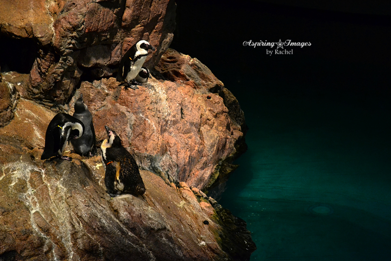 {PHOTOS} Under the Sea at the New England Aquarium