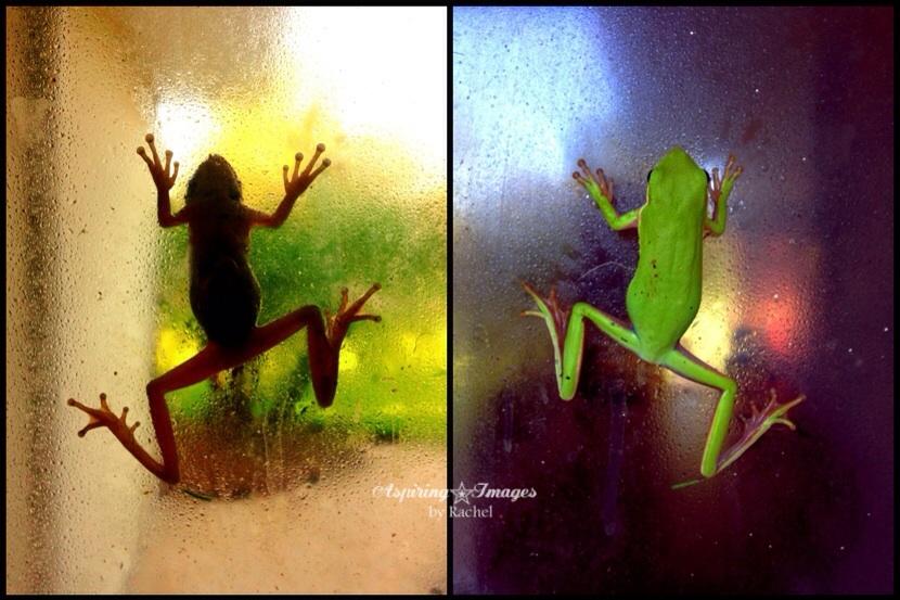 2012-July-Frog