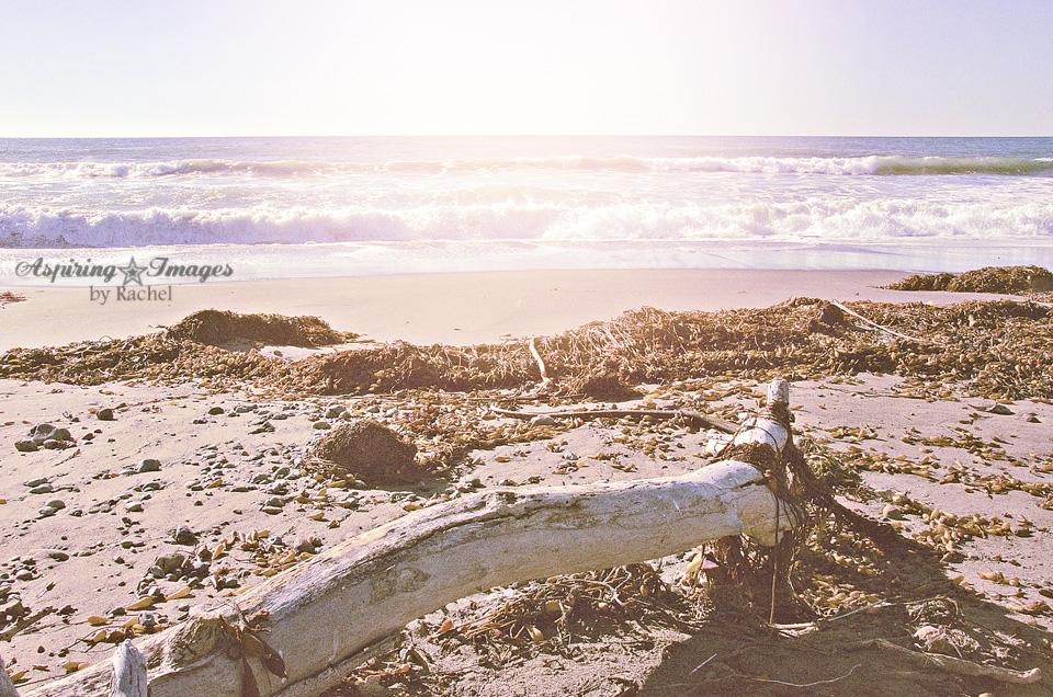 AspiringImagesbyRachel-California-BeachAlcove-wLargeDriftwood