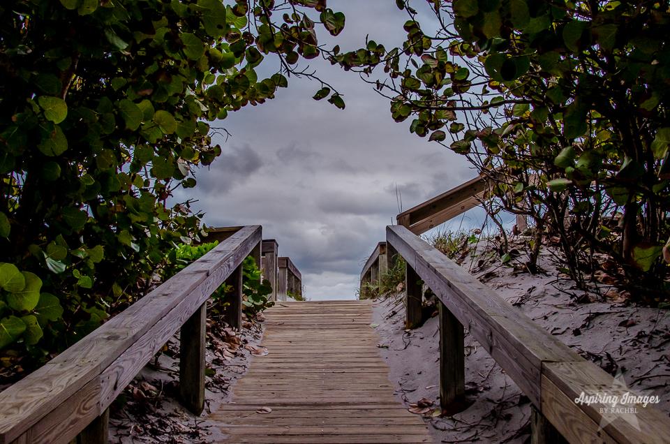 AspiringImagesbyRachel-Beach-Florida-AccessTrees