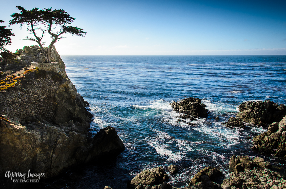 Lone Cypress - Pebble Beach, California