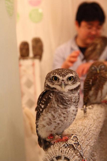 owl cafe tokyo