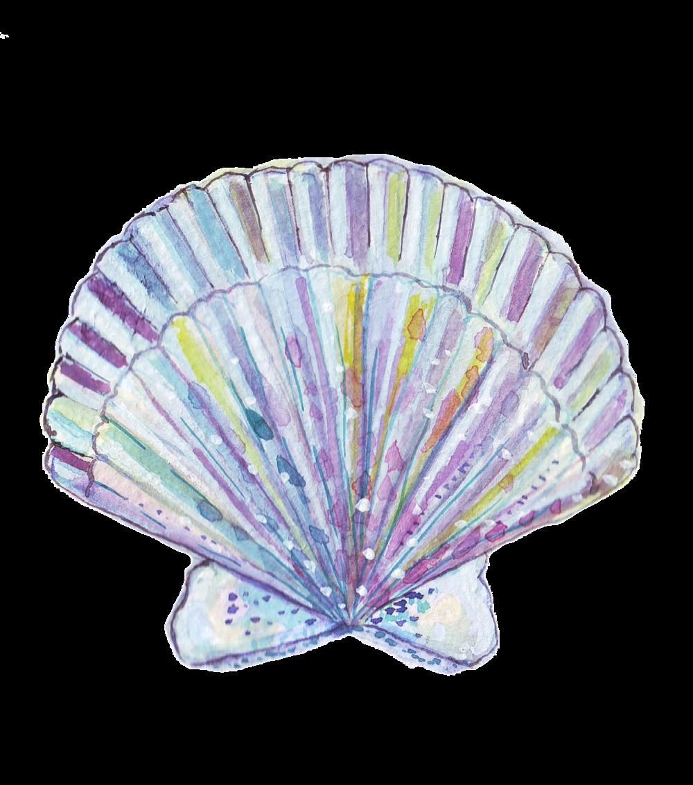 seashell1.png
