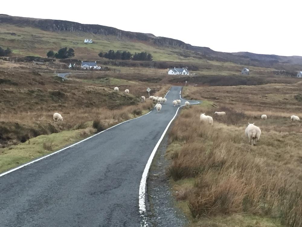 Isle of Skye traffic jam