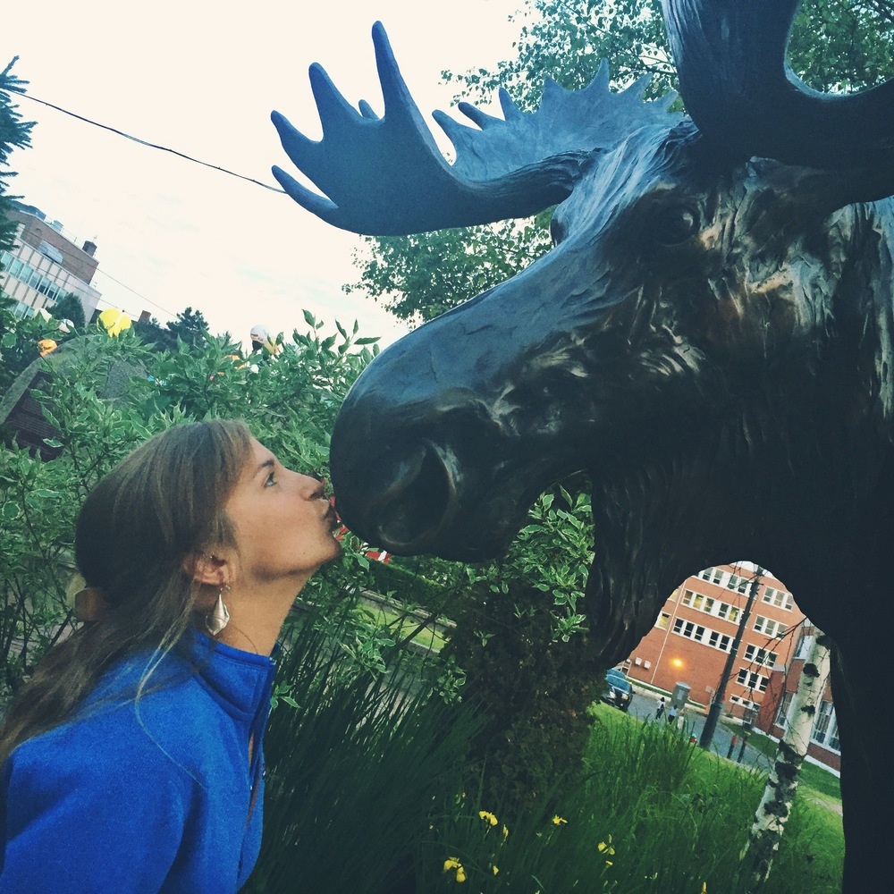 Moose kisses the moose in Saint John, New Brunswick.