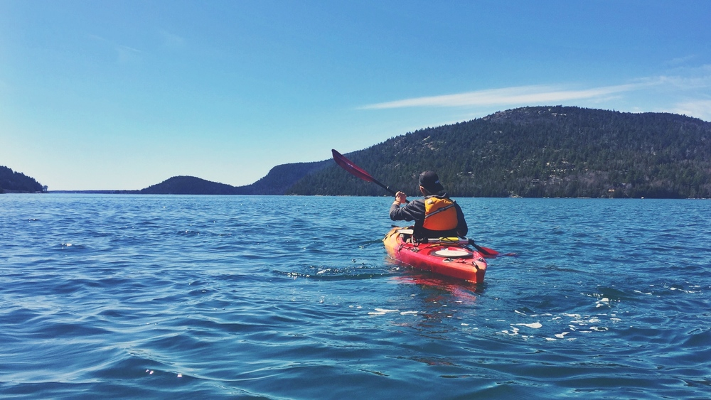 Teton explores the waters of Somes Sound.