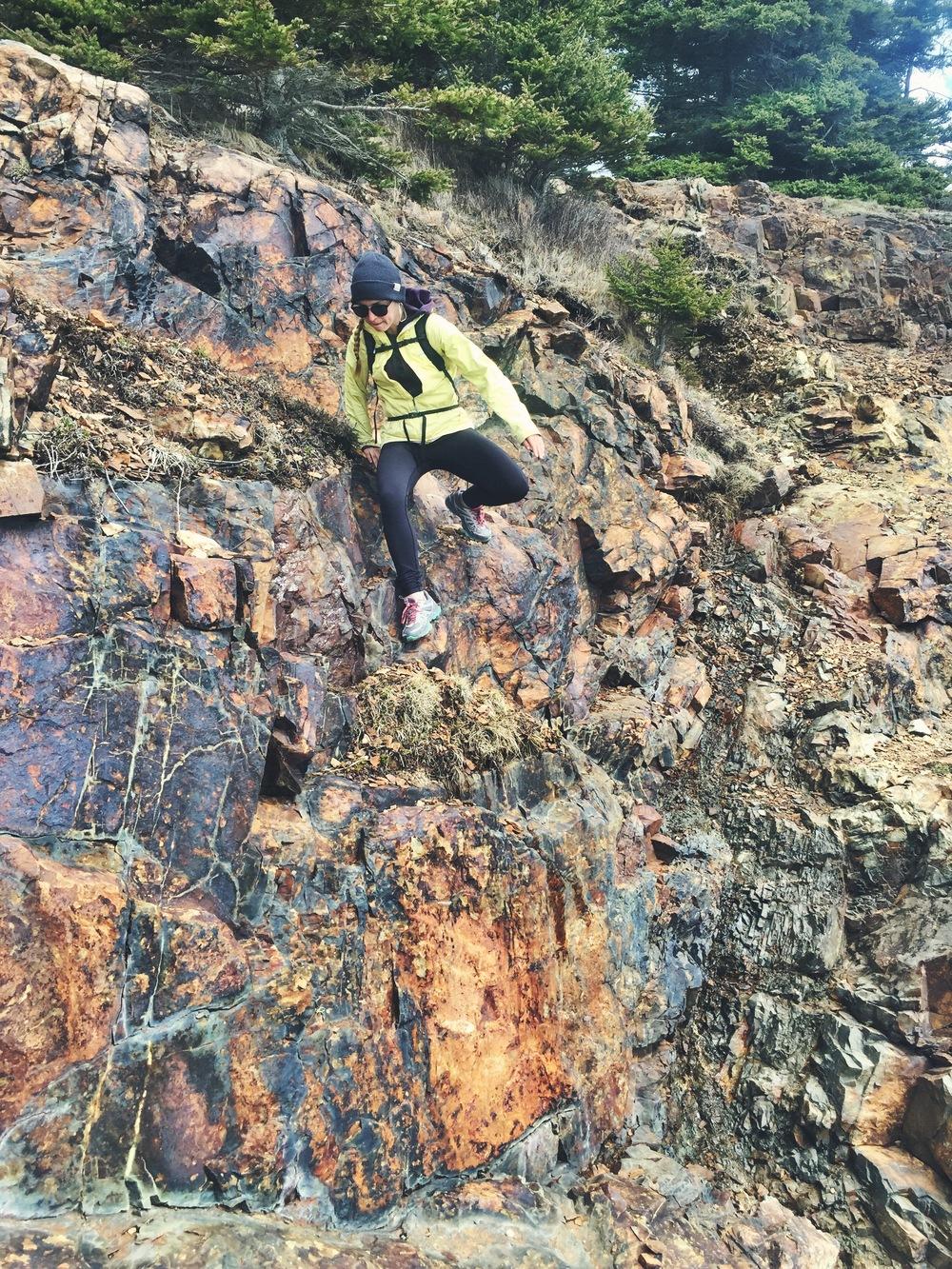 Moose descends a rock face to get closer to the crashing seas.