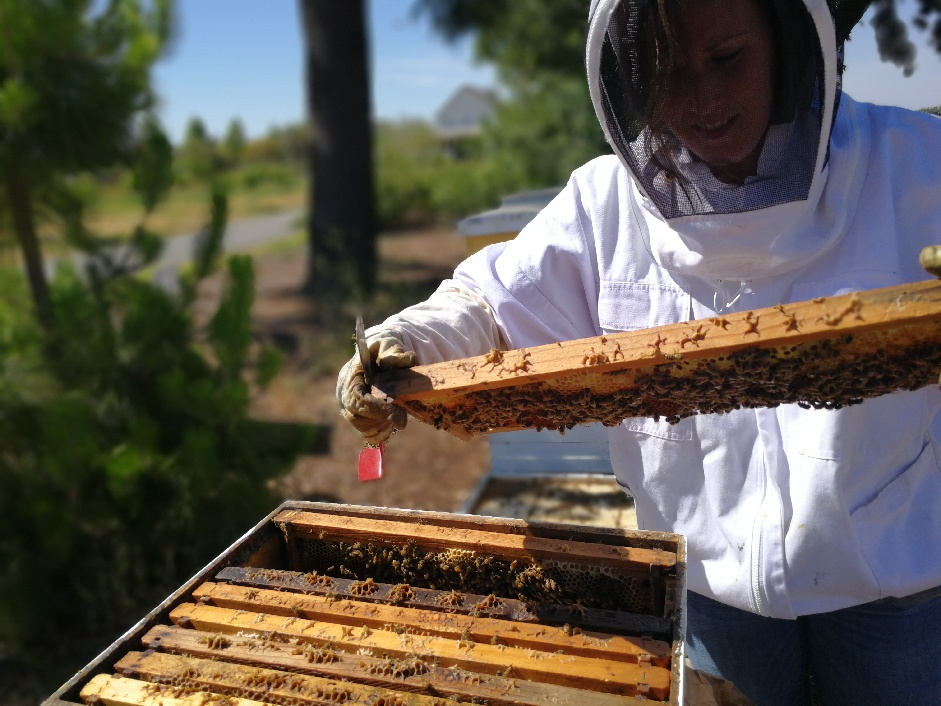 Saturday, September 29, 2018   Workshop: Backyard Beekeeping For The  Absolute Beginner