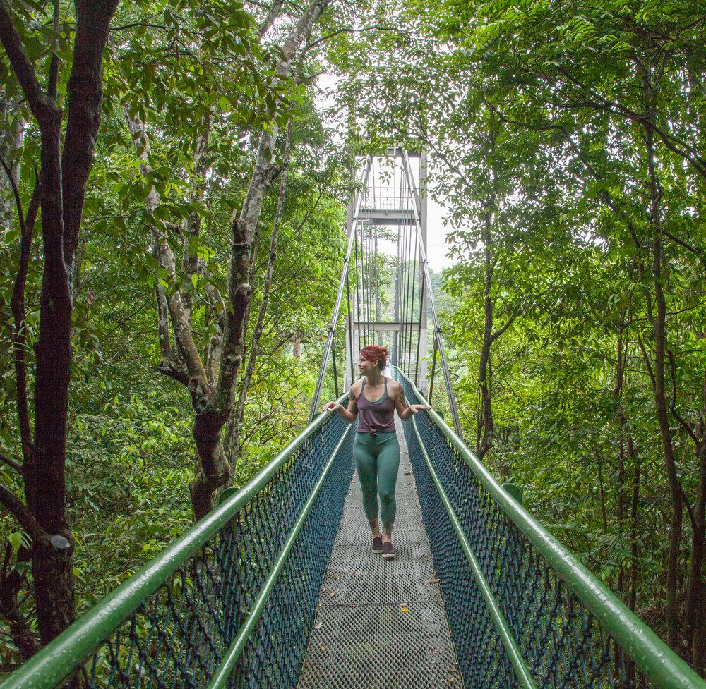 MacRitchie Reservoir Treetop Walk in Singapore