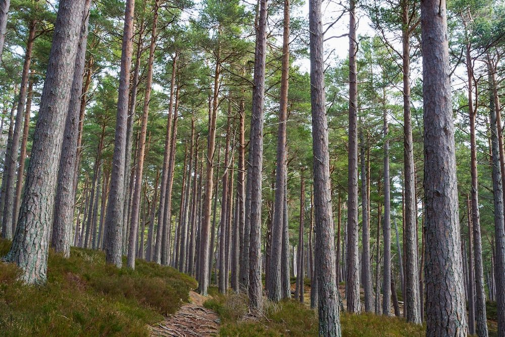 02.True Highlander - Camping, foraging, fishing, bushcraft, archery, highlander ambush
