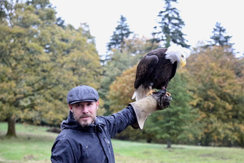 Falconry for incentives