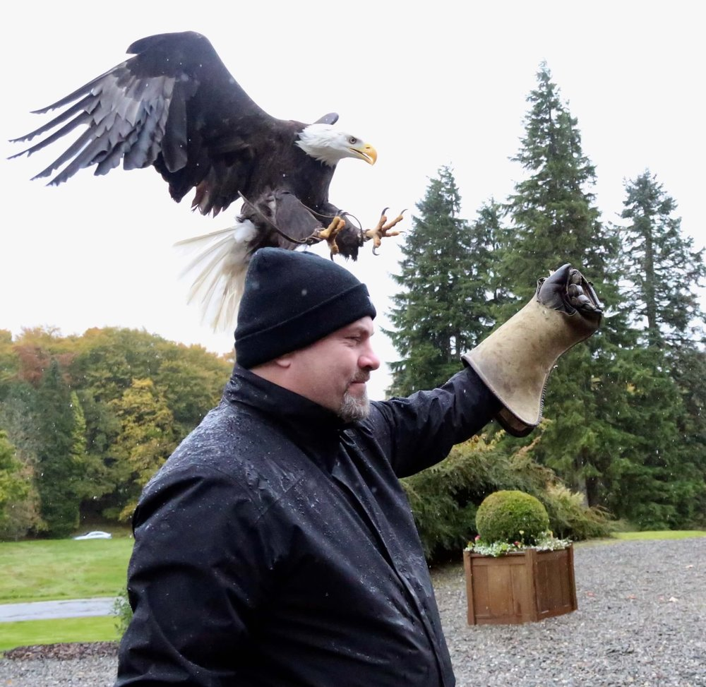 Bald+Eagle