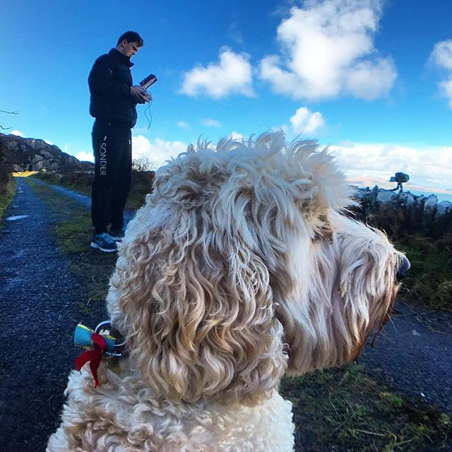 Thats patience with a bow on top 🐶🎀 • • • • • • #timelapse #drone #dogsofinsta #cockerpoo #photooftheday #irishpassion #ireland #irelandaily #wanderlust #landscape #clouds #travelphotography #kerry #view #dronestagram ☘️