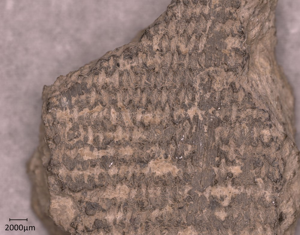 Prehistoric textiles and nomads