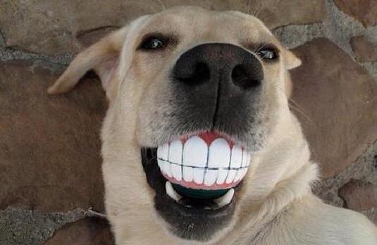 Dog Teeth.jpg