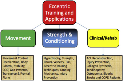 3 eccentric training things.jpg