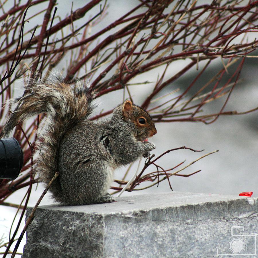 wildlife_14.jpg