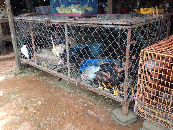 eatdrinklaos-mak-kai-chickens