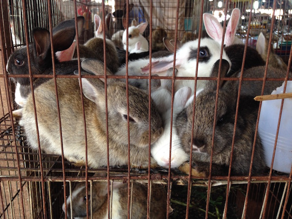 eatdrinklaos-mak-kai-baby-rabbits