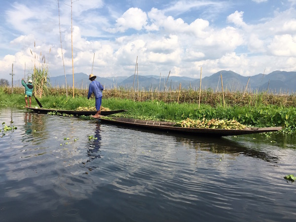 The canals are cargo routes to transport fruit, vegetables, bamboo, and other goods