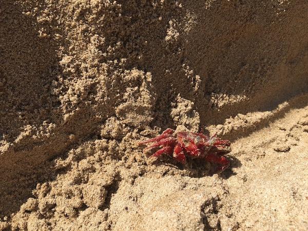 eatdrinklaos-myanmar-ngapali-crab