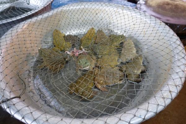 eatdrinklaos-vientiane-market-103-frogs