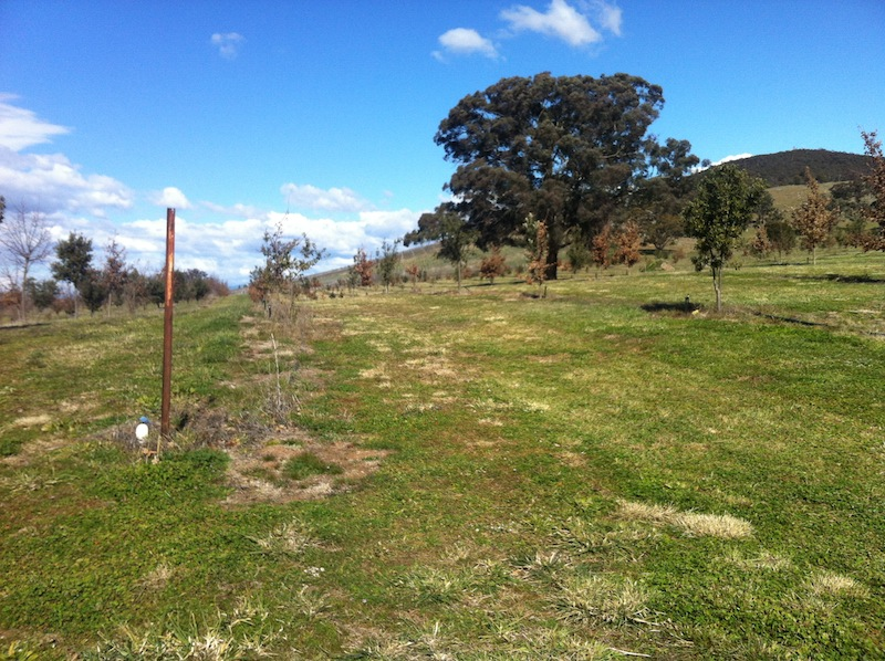 Mount Majura truffle farm on the outskirts of Canberra
