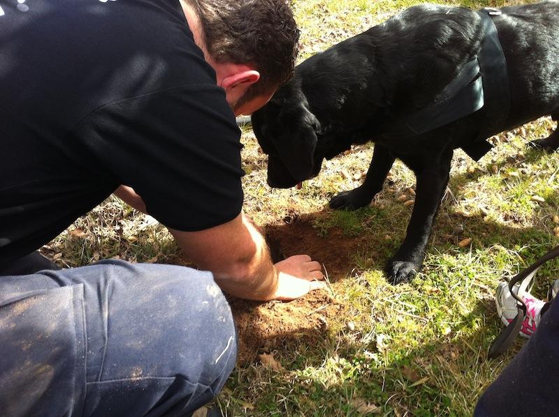 eatdrinklaos-canberra-truffles-dig