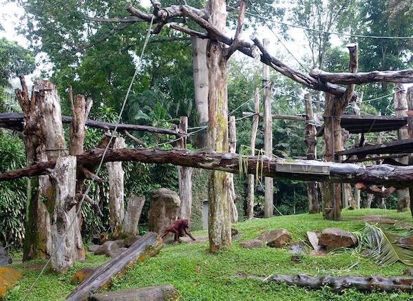 eatdrinklaos-singapore-best-family-fun-zoo