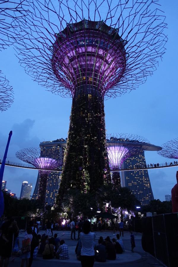 eatdrinklaos-singapore-best-family-fun-supertrees