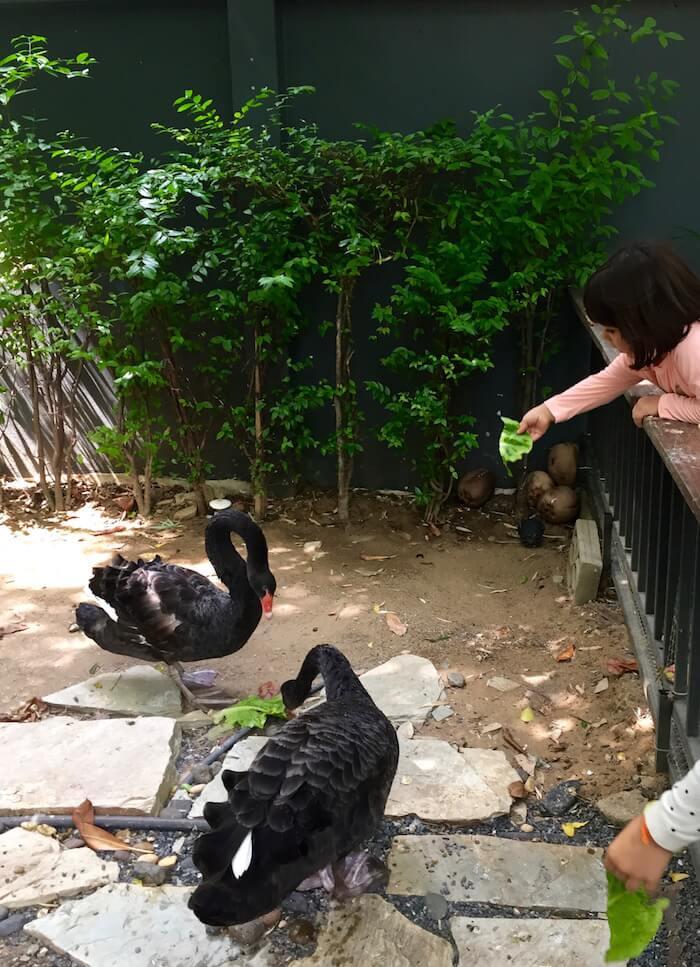 eatdrinklaos-train-bangkok-gardens-swans
